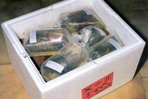 transportirovka-ryby-v-akvariume